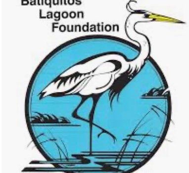 Update from Batiquitos Lagoon Foundation